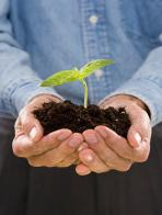 Man holding seedling plant growing in soil